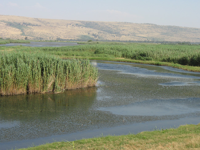 Wetlands restoration at Agamon Hula