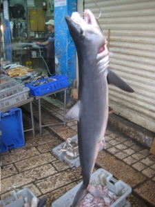 Jaws! in Akko market